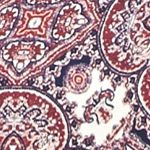 Sale: Pink Rose: Blue Ivory/ Burgundy Pink Rose Mock Neck Swing Dress