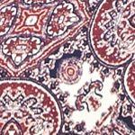 Casual Dresses for Juniors: Blue Ivory/ Burgundy Pink Rose Mock Neck Swing Dress