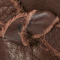 Frye Accessories: Dark Brown Frye Knotted Tassel