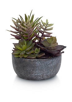 Elements 5.5-in. x 7.5-in. Potted Succulent Plant Figurine