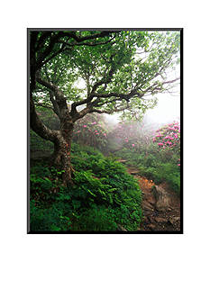 Art.com Craggy Gardens, Pisgah National Forest, North Carolina, USA by Adam Jones Mounted Photo