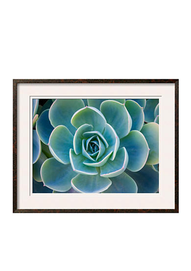 Art.com Close-Up of a Succulent Plant by Diane Miller, Framed Photographic Print