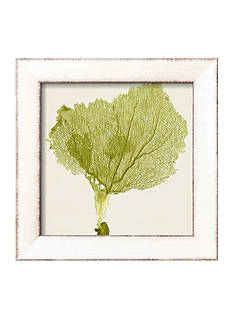 Art.com Sea Fan VIII by Vision Studio, Framed Art Print