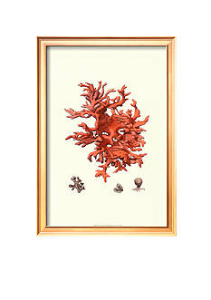 Art.com Red Coral III Framed Art Print
