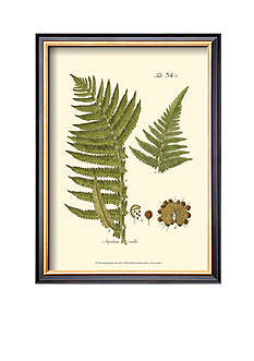 Art.com Small Antique Fern III Framed Art Print