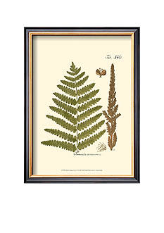 Art.com Small Antique Fern VI Framed Art Print