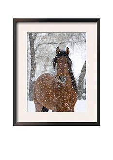 Art.com Bay Andalusian Stallion Portrait with Falling Snow, Longmont, Colorado, USA Framed Art Print Online Only