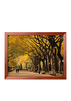 Art.com Central Park, New York City, NY, USA Framed Photographic Print