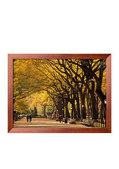 Art.com Central Park, New York City, NY, USA Framed Photographic Print
