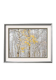 Art.com Fall Birch, Framed Photographic Print