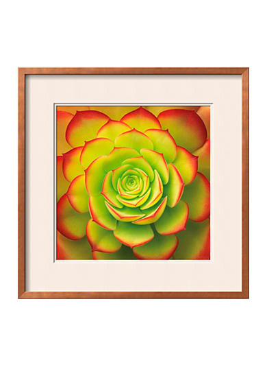 Art.com Fiery Succulent, Framed Art Print