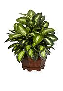 Nearly Natural 24-in. Golden Dieffenbachia Silk