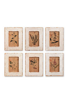 Napa Home & Garden 6-Piece Framed Botanical Prints Set
