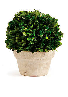 Napa Home & Garden™ 8-in. H Medium Preserved Boxwood Ball Topiary