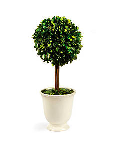 Napa Home & Garden™ 16-in. H Preserved Greens Topiary in Beaded White Pot