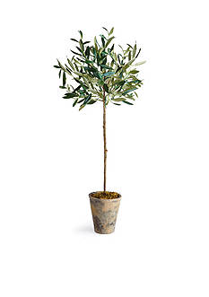 Napa Home & Garden 30-in. Potted Olive Tree