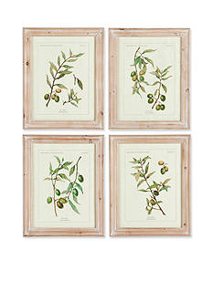 Napa Home & Garden 4-Piece Framed Botanical Print Set