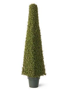 National Tree Company Mini Boxwood Square with Greenpot