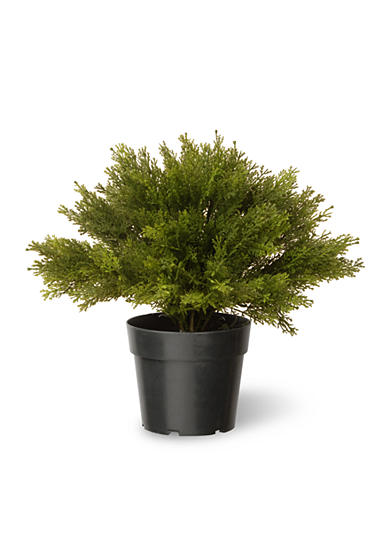 National Tree Company® Globe Juniper with Green Pot