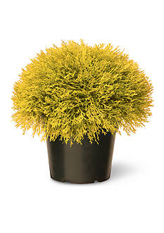 National Tree Company Golden Juniper Bush with Green Pot