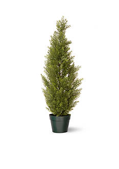 National Tree Company Arborvitae in Green Growers Pot