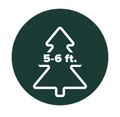 Four illustrated Christmas trees, each with different size ranges on them. Under five feet, five to six feet, seven to eight feet and over eight feet