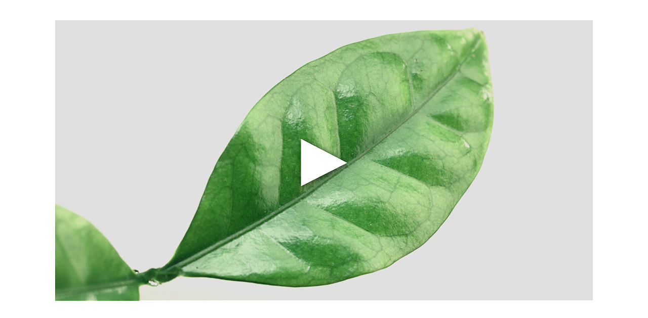 A video about the serum. Boost the skin's 5 vital functions, regeneration, oxygenation, nutrition, hydration, protection.