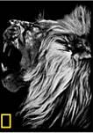 Nat Geo Lion Graphic Crew Fleece Sweatshirt