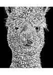 Girls 7-16 Word Art Graphic T-Shirt - Alpaca