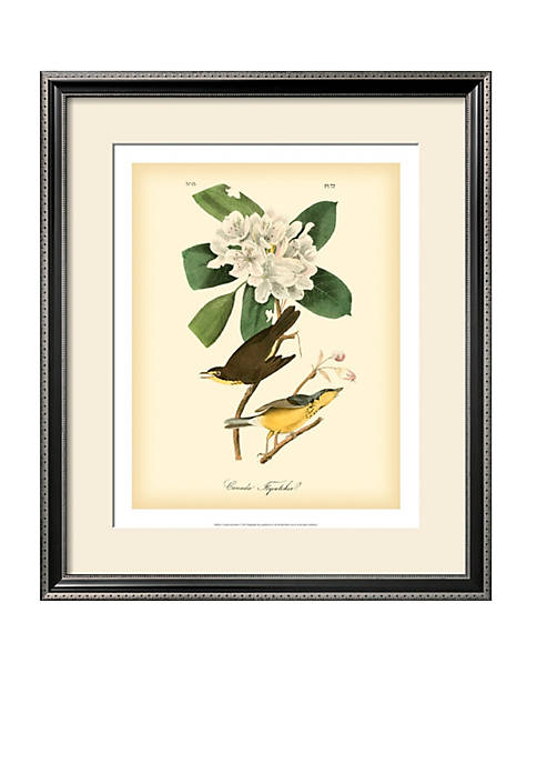 Art.com Canada Flycatcher Framed Art Print