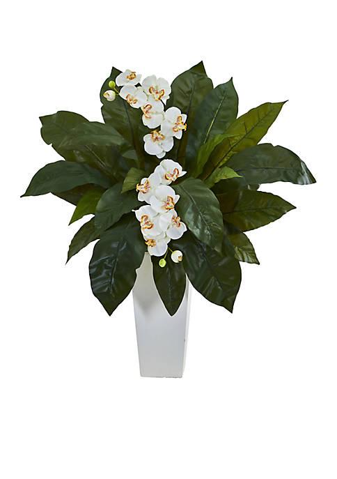 Orchid and Birdsnest Fern Artificial Arrangement