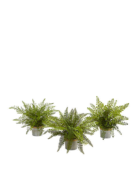 Assorted Ferns with Planter  Plant - Set of 3