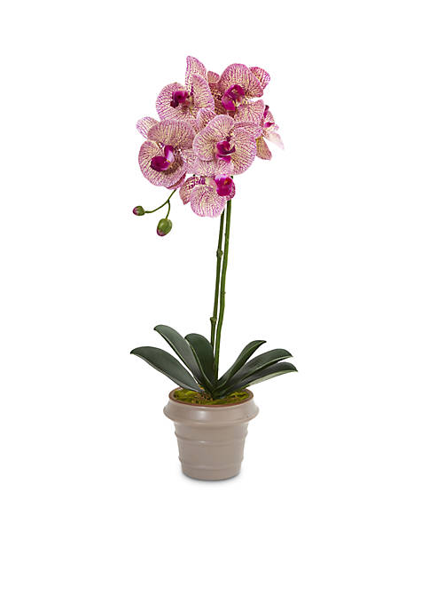 Nearly Natural Designer Phalaenopsis Orchid Artificial Arrangement