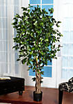 6-in. Palace Style Ficus Silk Tree
