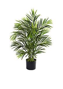 2.5-ft. Areca Palm Tree