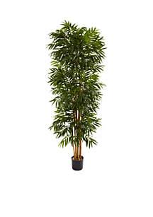 7.5-Foot Phoenix Palm Tree