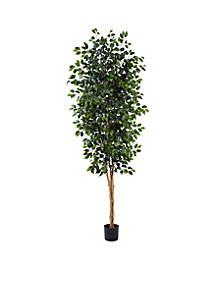 8-Foot Ficus Tree