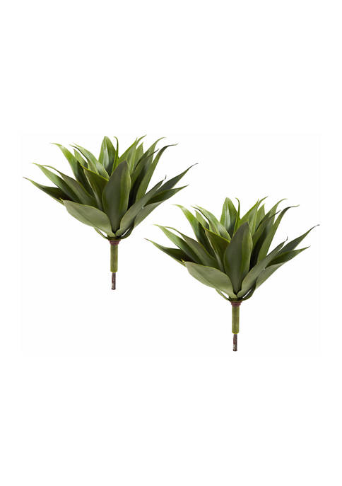 Agave Succulent Plant - Set of 2