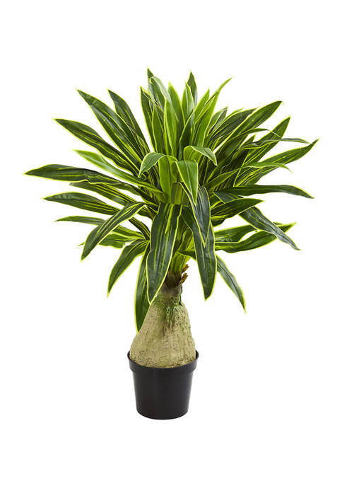 Nearly Natural Dracaena Plant