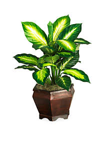 20-in. Golden Dieffenbachia Silk Plant with Wood Vase