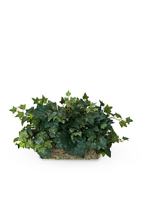 Ivy Ledge Plant Silk Plant