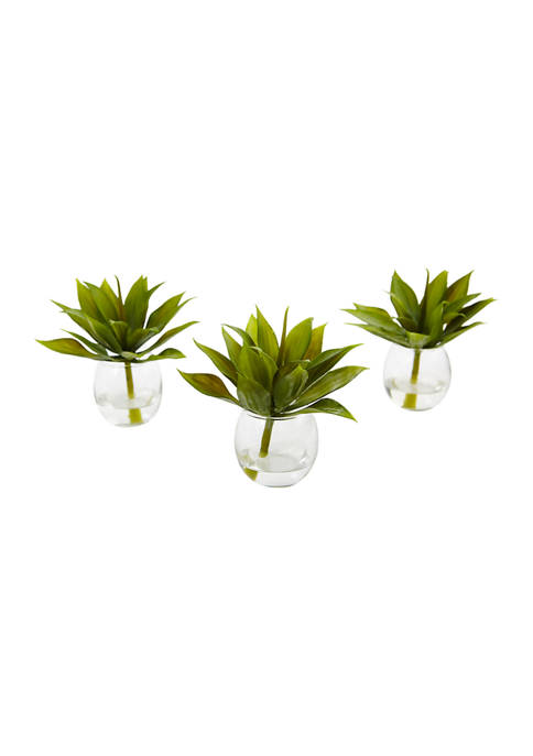 Nearly Natural Mini Agave Succulent Trio in Glass