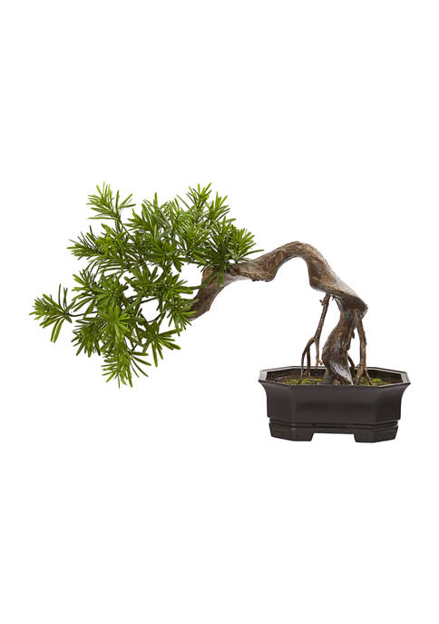 Nearly Natural Bonsai Styled Podocarpus Plant
