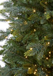 Oregon Fir Christmas Tree