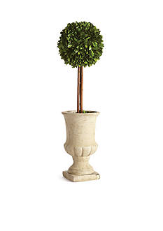 Napa Home & Garden™ Boxwood 24-in. Single Ball Topiary in Urn