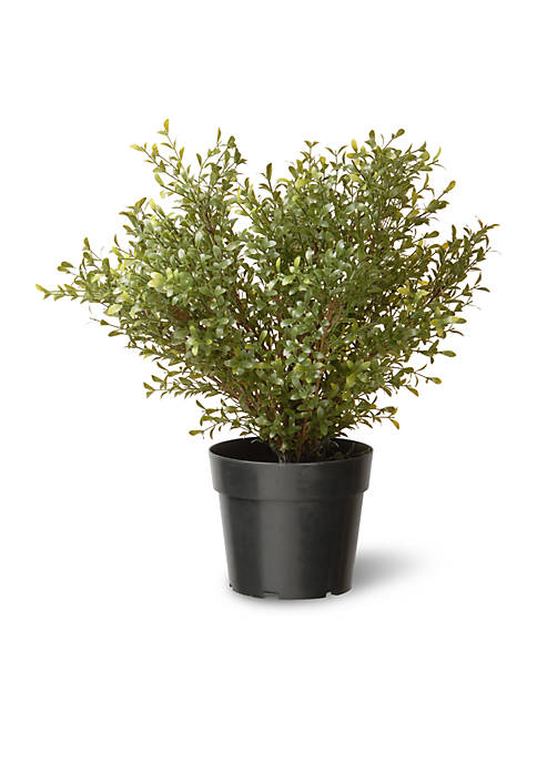 National Tree Company® Argentea Plant with Green Pot
