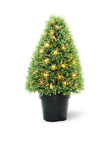 Boxwood Tree with Dark  Green Growers Pot with 50 Clear Lights