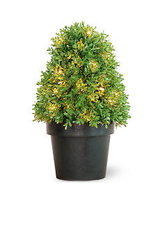 National Tree Company® Boxwood Tree with Green Pot