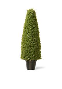 Boxwood Tree With Green Pot