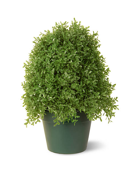 Boxwood Tree W/ Green Pot